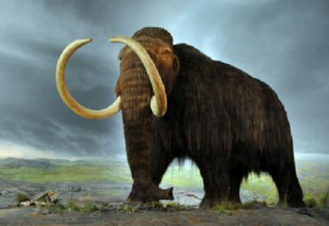 Researchers makes breakthrough in resurrecting a wooly mammoth