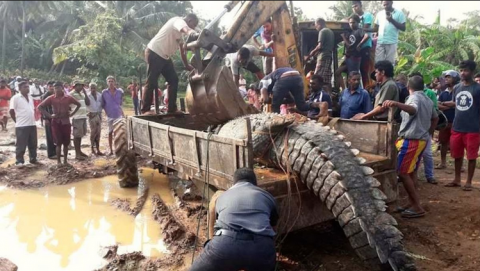OMG! This 17-Foot-Long and almost A-Ton-Weight Crocodile was Caught in Sri Lanka